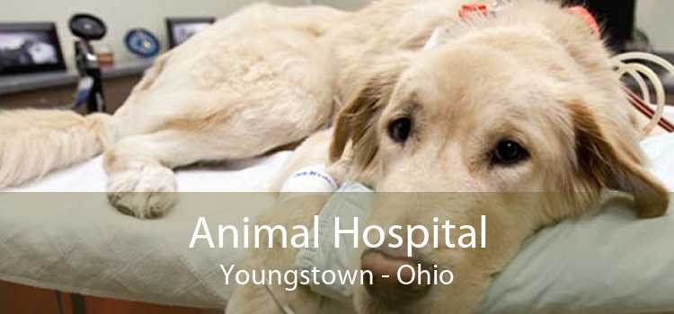Animal Hospital Youngstown - Ohio