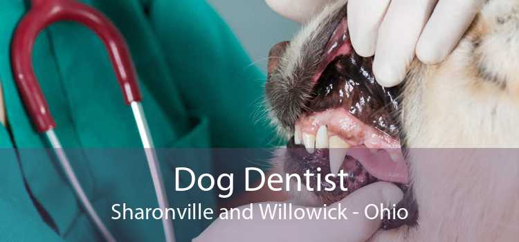 Dog Dentist Sharonville and Willowick - Ohio