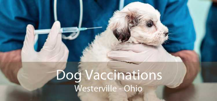 Dog Vaccinations Westerville - Ohio