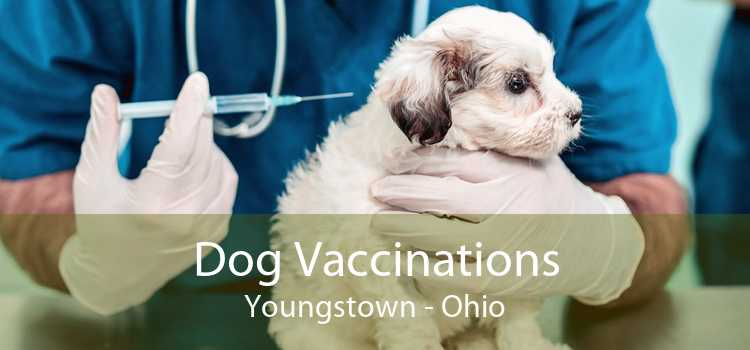 Dog Vaccinations Youngstown - Ohio