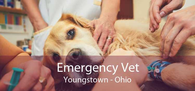 Emergency Vet Youngstown - Ohio