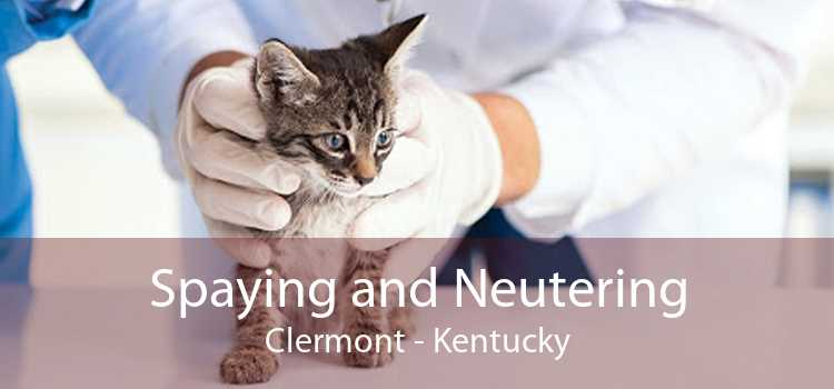 Spaying and Neutering Clermont - Kentucky