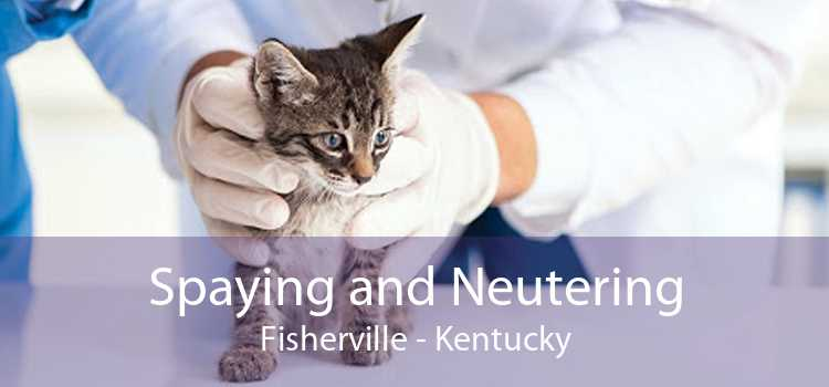 Spaying and Neutering Fisherville - Kentucky