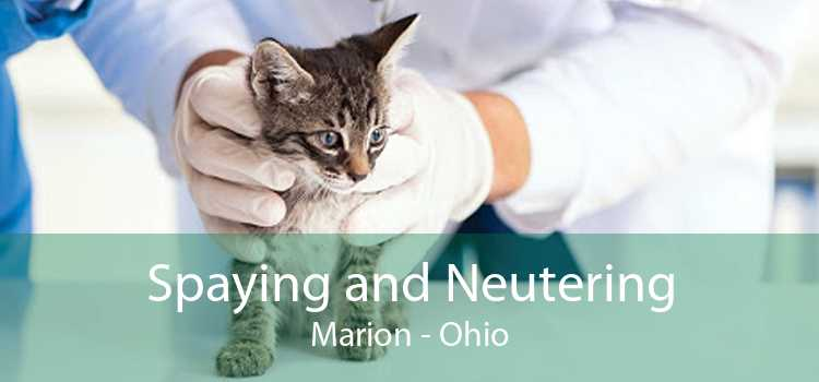 Spaying and Neutering Marion - Ohio