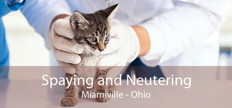 Spaying and Neutering Miamiville - Ohio