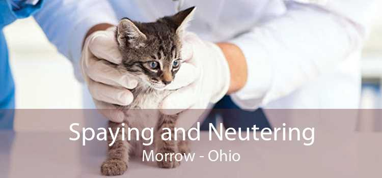 Spaying and Neutering Morrow - Ohio