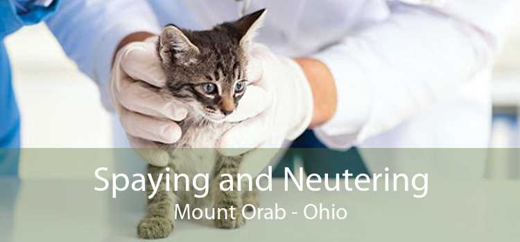 Spaying and Neutering Mount Orab - Ohio
