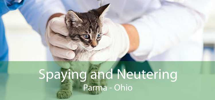 Spaying and Neutering Parma - Ohio