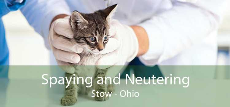 Spaying and Neutering Stow - Ohio