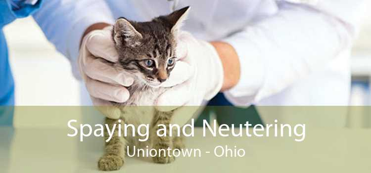 Spaying and Neutering Uniontown - Ohio