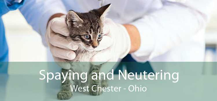 Spaying and Neutering West Chester - Ohio