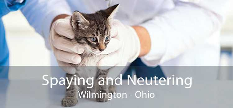 Spaying and Neutering Wilmington - Ohio