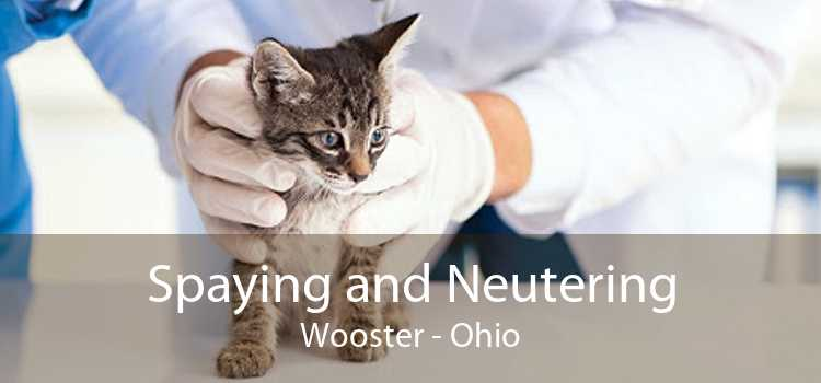 Spaying and Neutering Wooster - Ohio